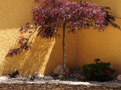 Muret extérieur entouré de végétation.